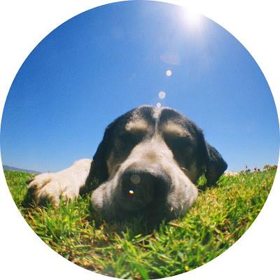 帶狗狗一起快樂出遊的好方法!(內有可以帶狗去的飯店推薦)