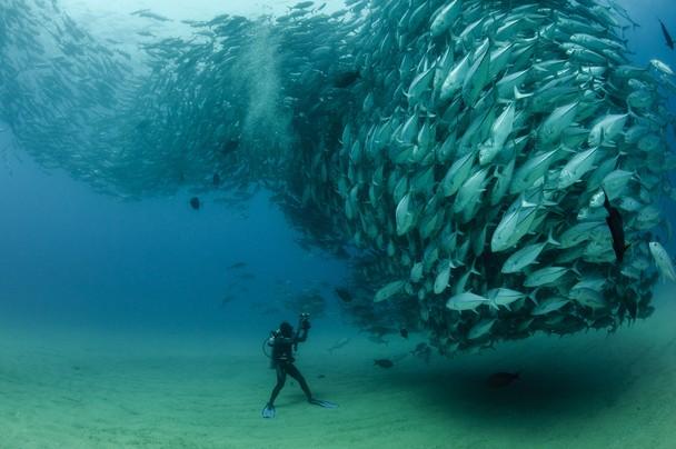 我要親眼看狗魚求愛龍捲風的海底景觀呀!