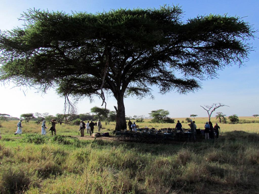什麼?在長頸鹿跟獅子生活的草原上吃飯?