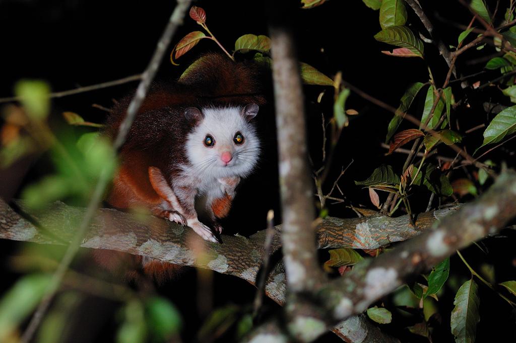 森林裡真的有動物大學?!