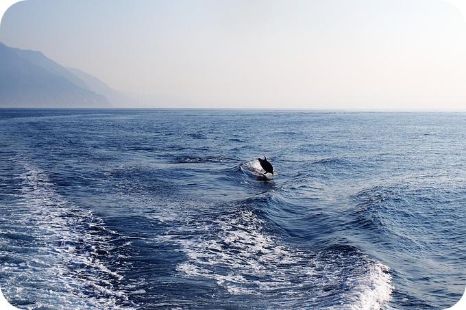 美哉 Formosa!!! 從海上看清水斷崖,賞日出,追海豚