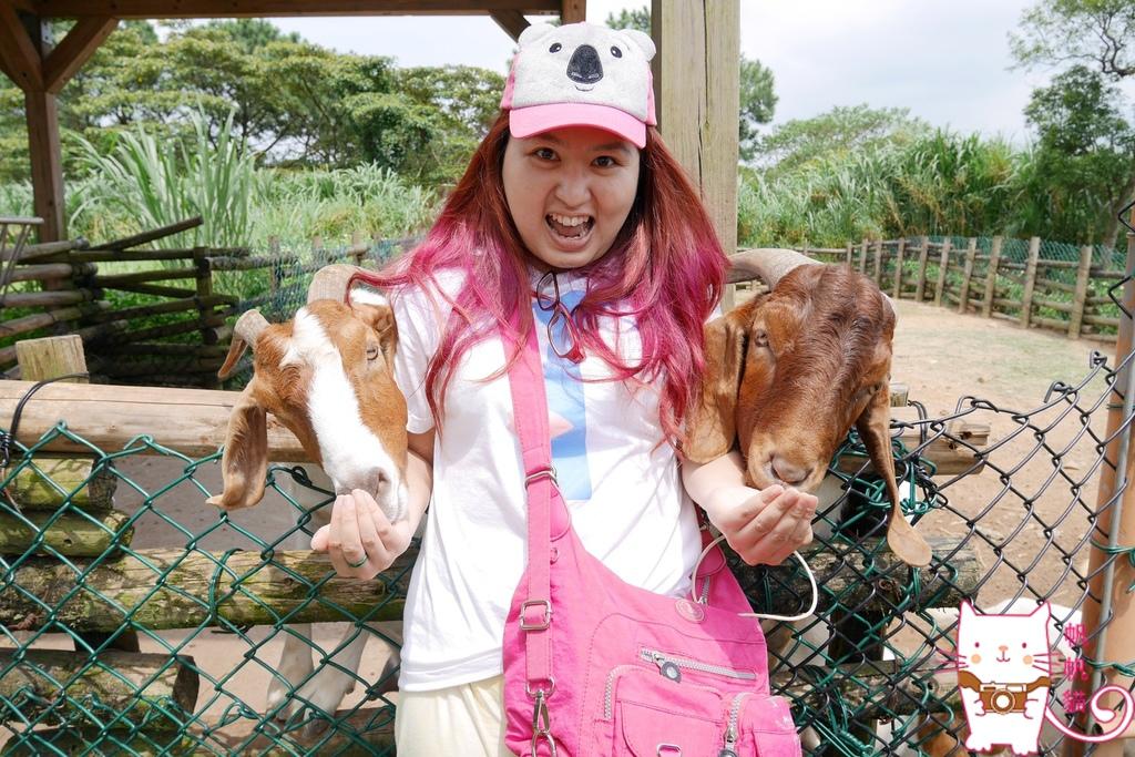 六福莊 台灣版馬達加斯加 餵超萌狐猴 幫象龜刷背 體驗猛獸環繞的震撼
