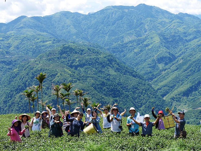 仙境採茶去 太平四村人香茶香咖啡香