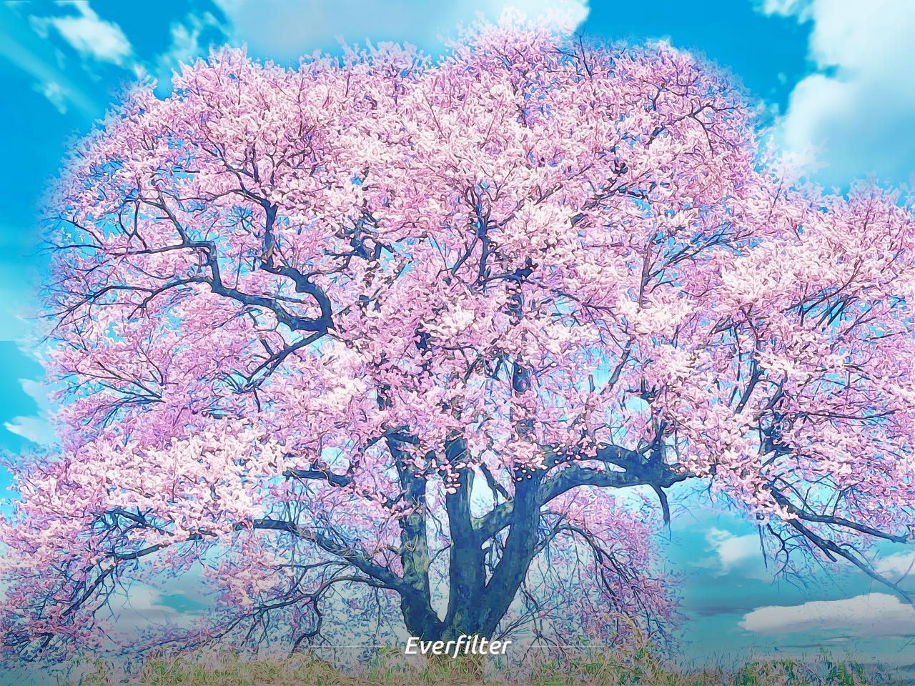 【春天特搜】粉嫩嫩限定,櫻花少女妳跟上了嗎?