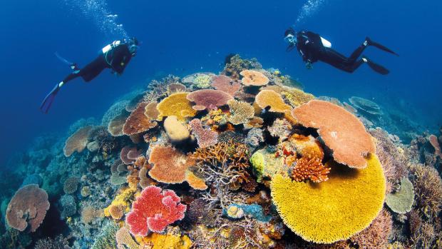 此生必來!全球五大潛水聖地一窺海底神秘世界