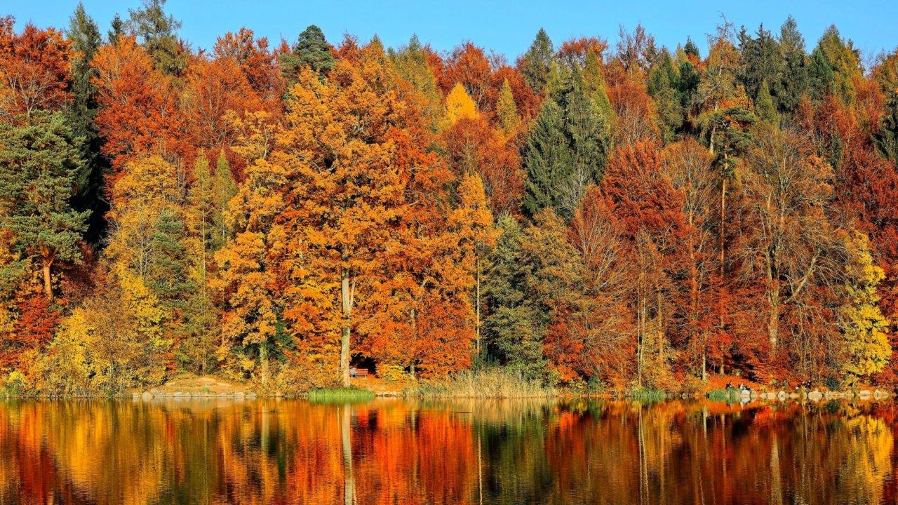 【秋季必去!】全台大熱門自然景點推薦:賞楓、芒草、金針花、落羽松