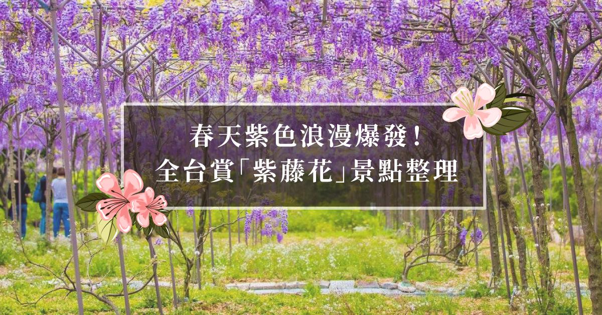 春天紫藤花浪漫爆發!全台高雅紫色花海景點總整理