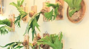 手作室內盆栽