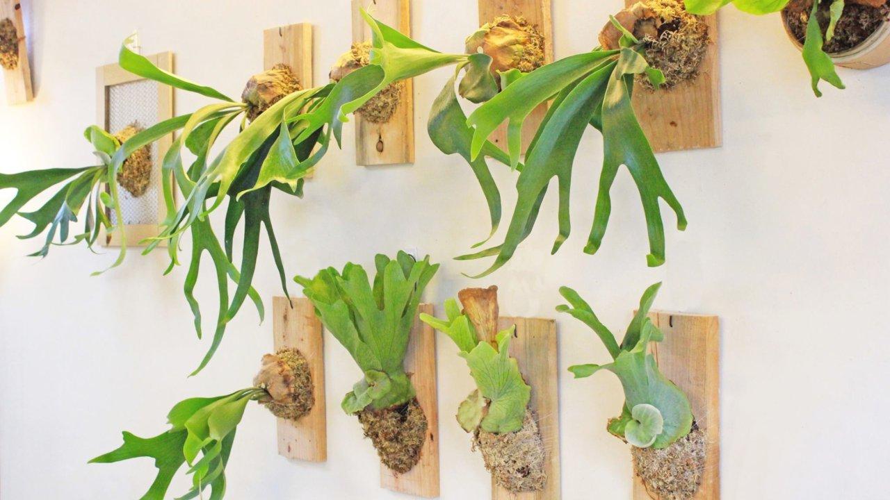 比鮮花更耐放!用植感花藝裝飾,提高居家幸福感