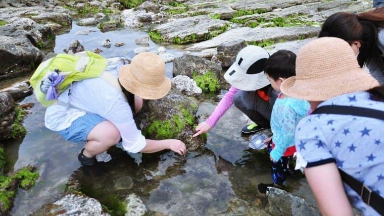 【基隆八斗子】潮境公園|親子潮間帶生態觀察