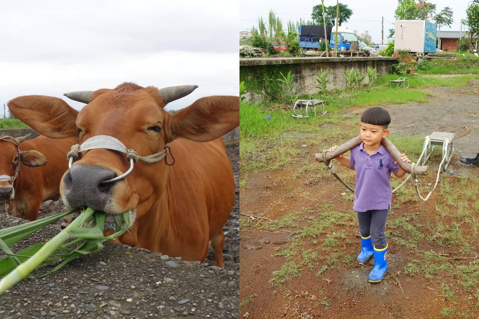 【宜蘭親子景點推薦】牛頭司耕牛小學堂|農耕體驗半日遊