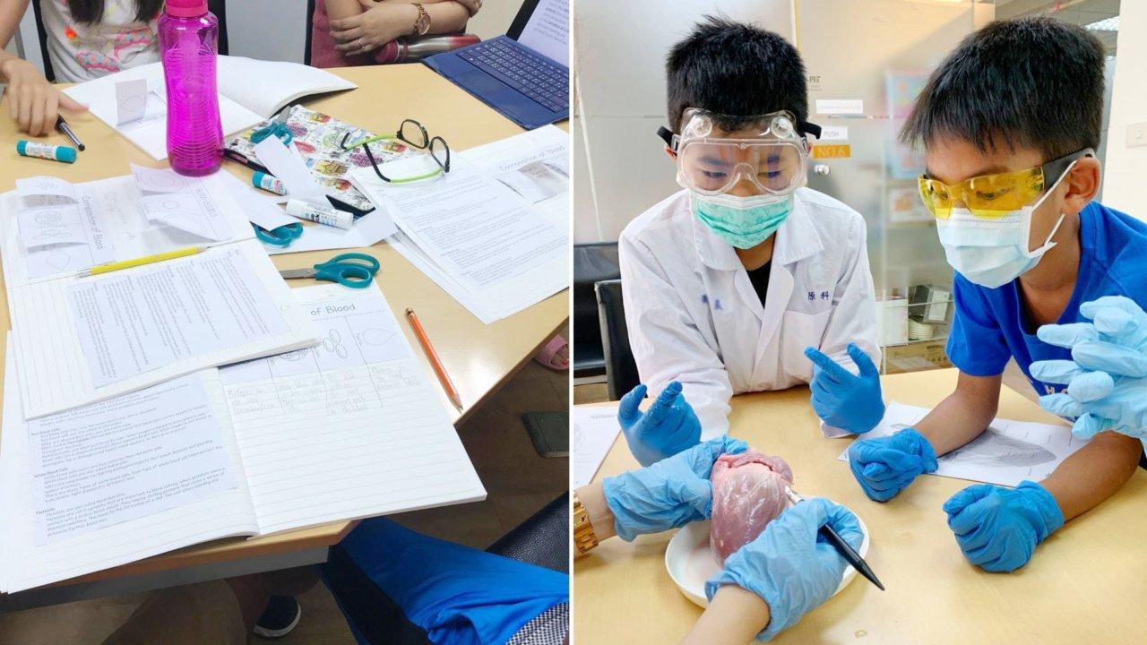 全英文線上課程|小小生物學家夏令營|探索人體構造的奧秘